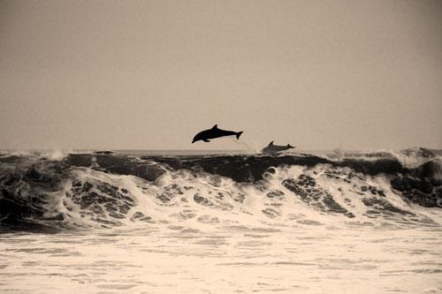 delfines para coaching